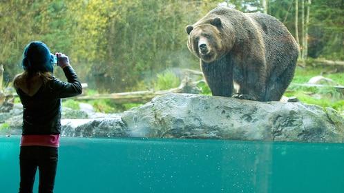SZ Grizzly.jpg