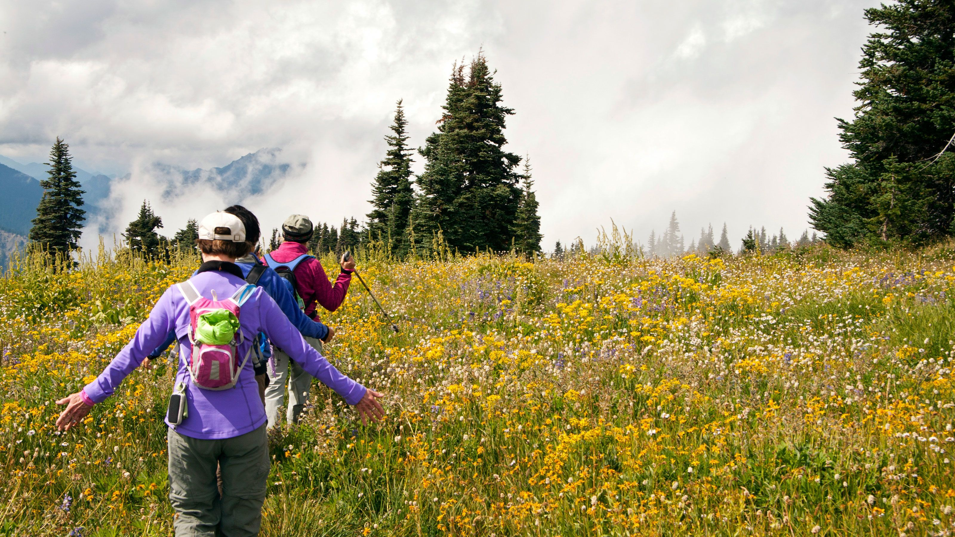 People hiking in a field of wild flowers in Olympic National Park in Washington