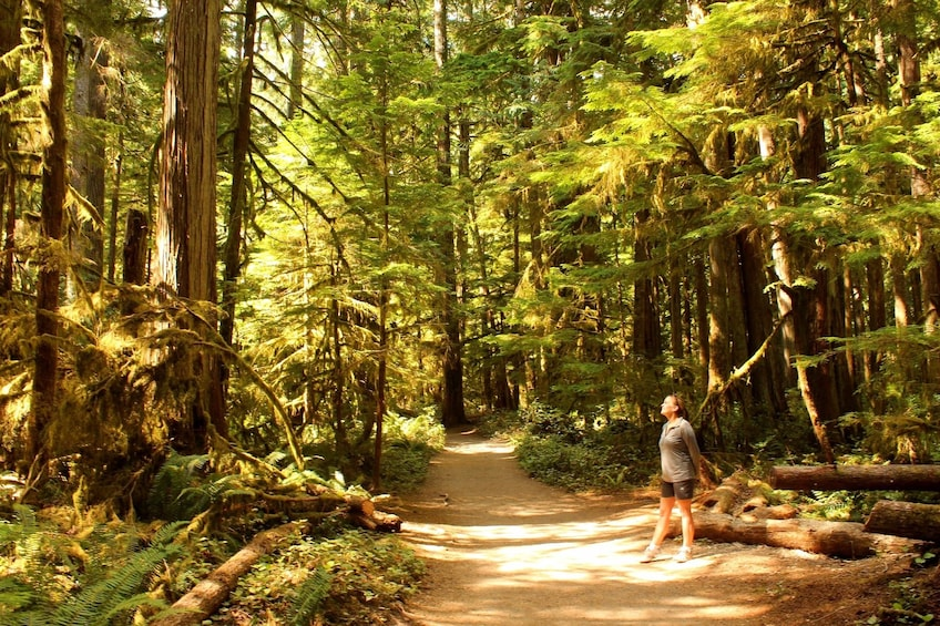 Olympic National Park from Seattle: All-Inclusive Day Tour