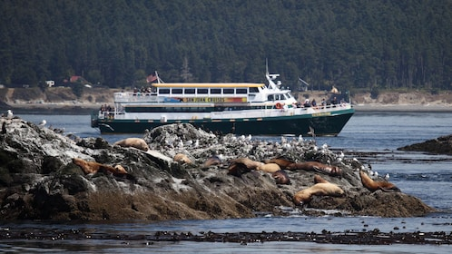 Cruise ship on a rocky shore line on the Chuckanut Bay in Washington