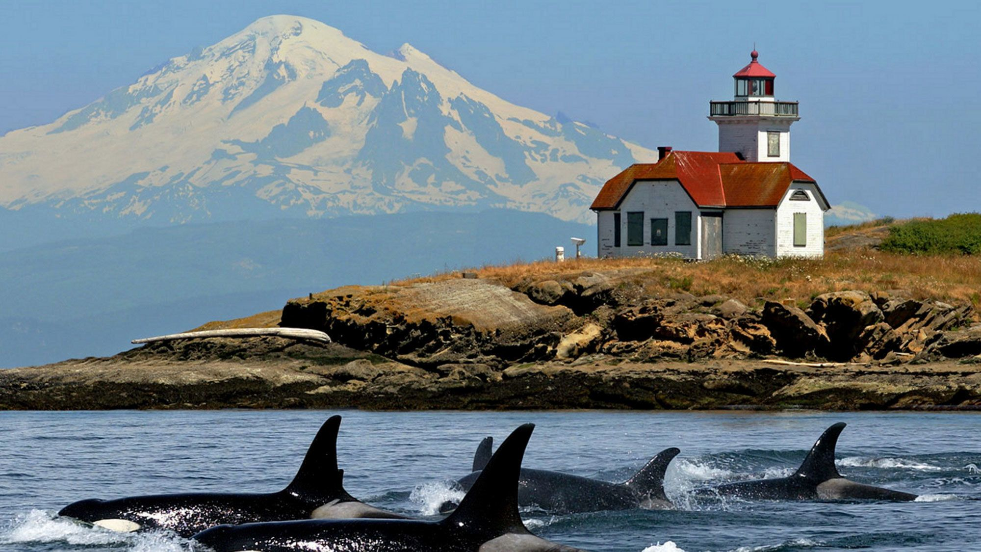 Full-Day San Juan Whale-Watching Cruise & Lunch