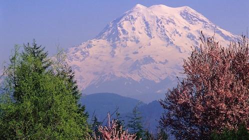 Mount Rainier through two trees