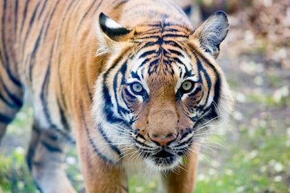 RS29398_Tigers JDL WPZ 04_15-2.jpg