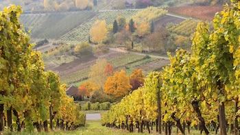 Excursion dans la vallée du Haut-Rhin moyen avec dégustation de vin et déje...