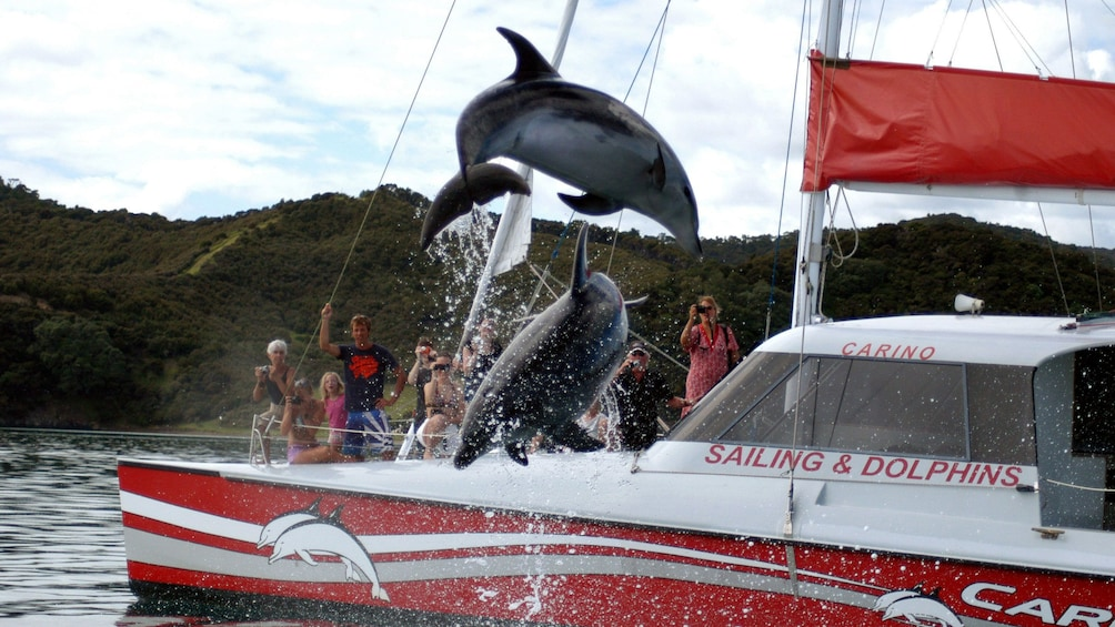 Show item 1 of 9. Dolphins leaping from the water in the pay of islands