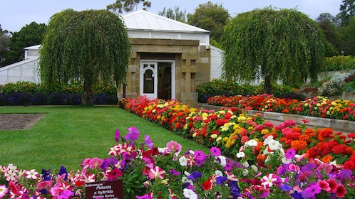 Beautiful view of the flowers in front of a building in Hobart