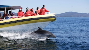 Bruny Island Tour & Wilderness Cruise from Hobart