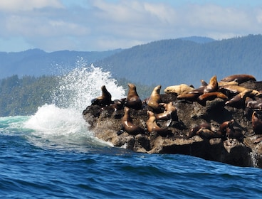 Victoria Whale Watching Tour on Covered Cruiser Vessel
