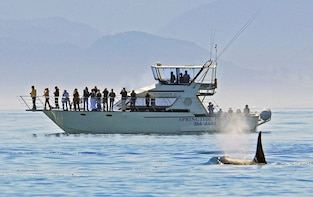 Whale Watching Tour by Ocean Cruiser from Victoria