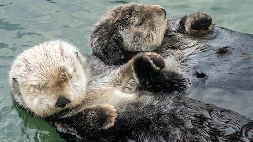 Skip-the-line Vancouver Aquarium Ticket