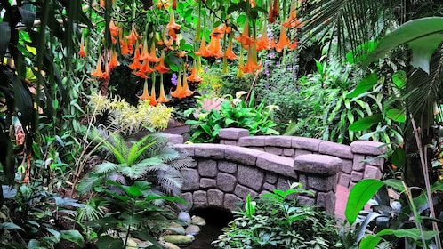 Small bridge over a creek amid the lush and colorful grouds at Victoria Butterfly Gardens in Victoria