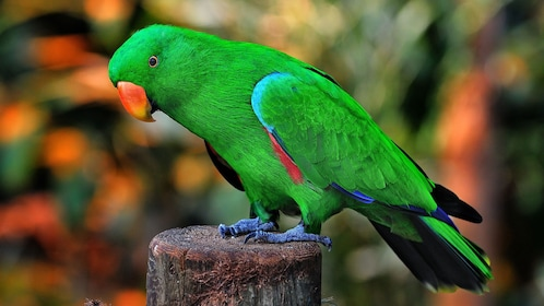 Green parrot at Victoria Butterfly Gardens in Victoria