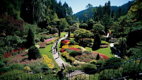 Well manicured garden in Vancouver