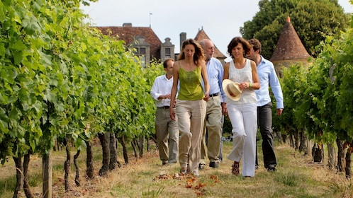 A group of people walking through a vineyard in France