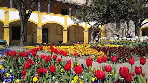 Tulips blooming in the courtyard garden at the Hospital at Arles