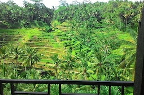 Monkey Forest, Ubud, and Rice Terraces