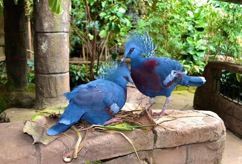 Show item 4 of 7. Bird Kingdom Niagara Falls
