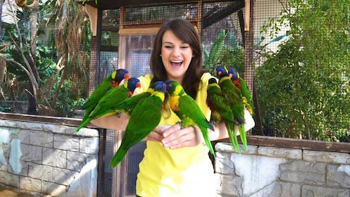 Holding a group of exotic birds in Niagara Falls
