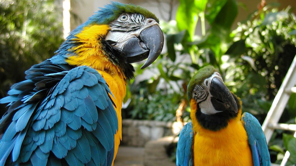 Show item 2 of 7. Colorful parrots of the Bird Kingdom showcase in Niagara Falls
