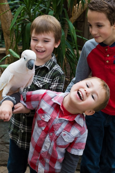 Show item 3 of 7. Bird Kingdom Niagara Falls
