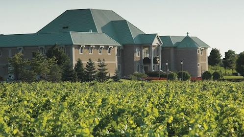 Visiting a vineyard at Niagara Falls