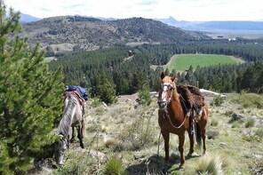 4hsHorseback Riding with snack in El Desafio, San Martín de los Andes, Arge...