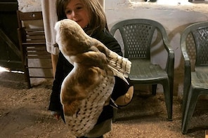 Special Taster Owl and Hawk Flying Experience