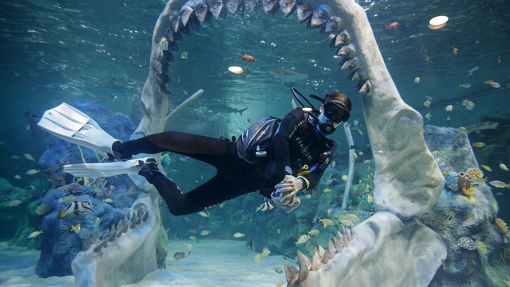 Show item 1 of 7. Dive with Sharks Experience at The Bear Grylls Adventure