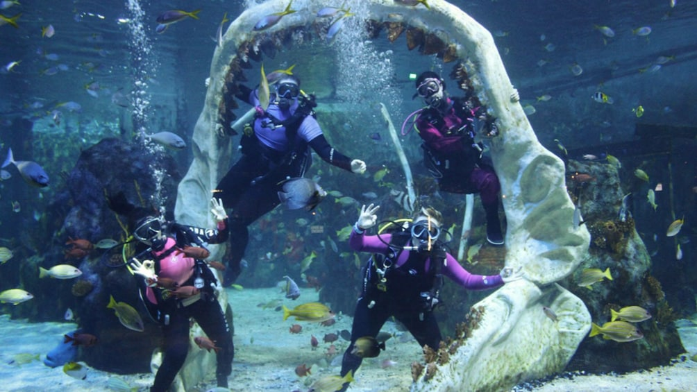 Show item 5 of 7. Dive with Sharks Experience at The Bear Grylls Adventure