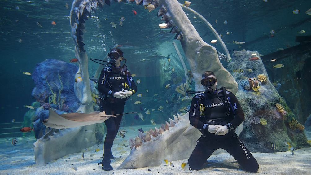 Show item 4 of 7. Dive with Sharks Experience at The Bear Grylls Adventure