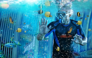 Cage Snorkel with Sharks