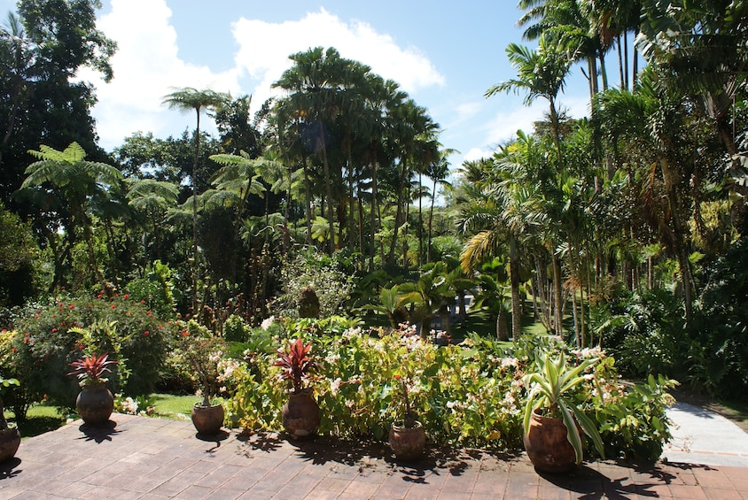 Show item 1 of 6. Balata Garden and Saint Pierre Private Excursion