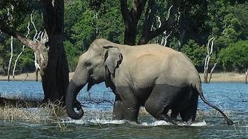Wild Family Adventure Tour In Sri Lanka
