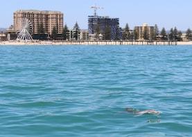 Wild Dolphin Safari