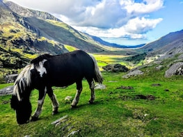 MANCHESTER: North Wales Adventure Sightseeing Day Trip Tour
