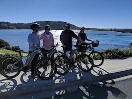 Small group Wildlife & Coastal Track E-Bike Tour with picnic
