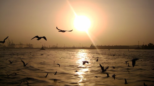 Birds flying low over the water in Cairo