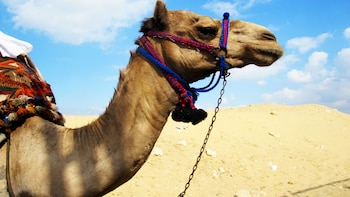 Darau Camel Market Half-Day Private Tour