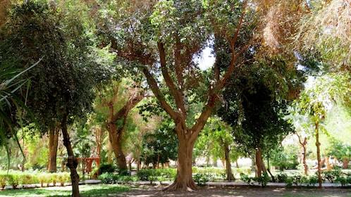 Trees line the path through the Aswan Botanical Garden