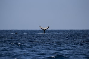 A chance to watch Whales and more sites in a private tour