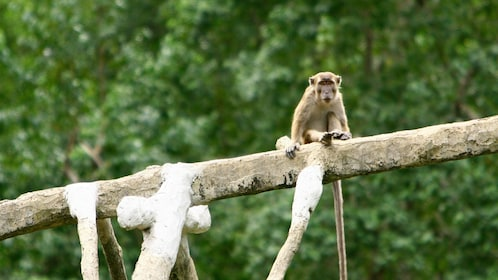 View of a monkey sitting on a tree branch in Sandakan