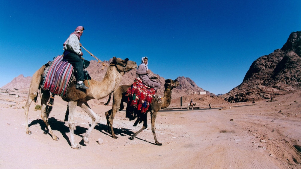 Camel Ride in Hurghada