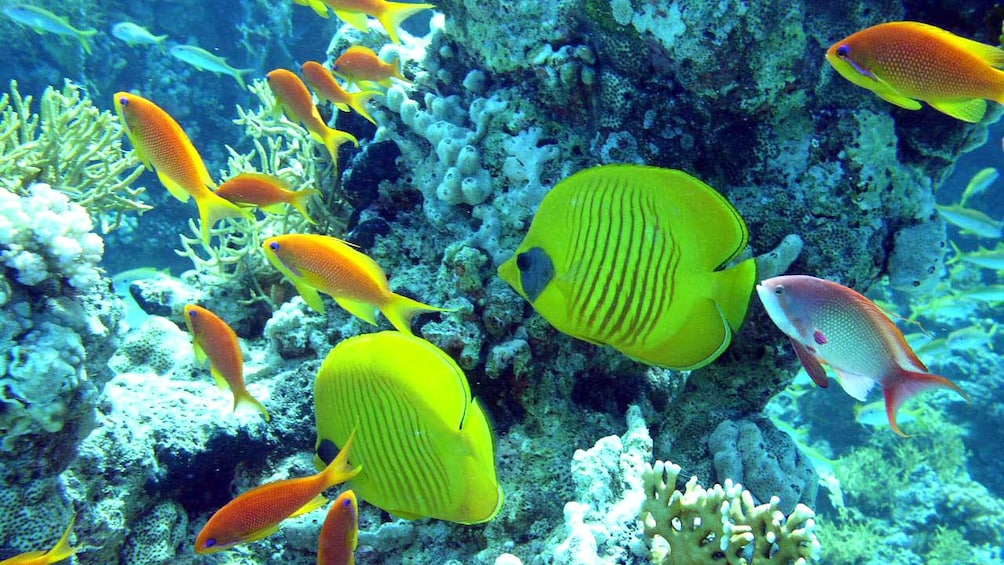 brightly colored fish in egypt