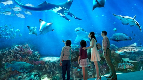 Family looking into a huge aquarium at SEA Aquarium in Singapore