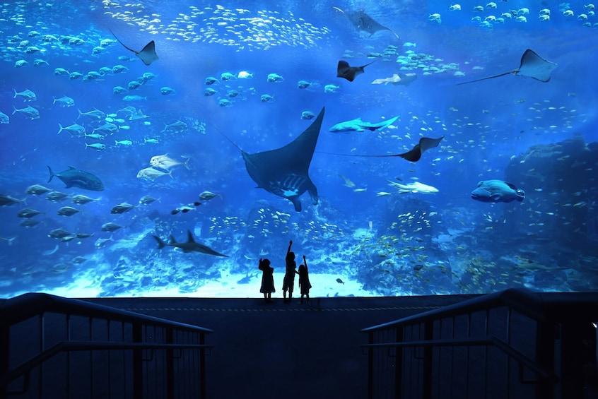 Show item 1 of 6. S.E.A. Aquarium™ One-Day Ticket