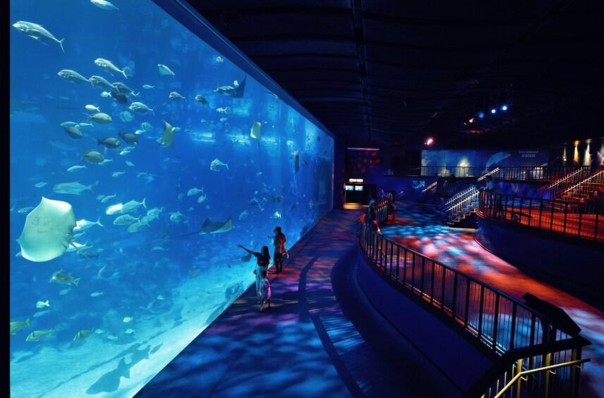 Show item 5 of 6. S.E.A. Aquarium™ One-Day Ticket