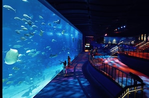 SEA Aquarium TM -ticket voor één dag