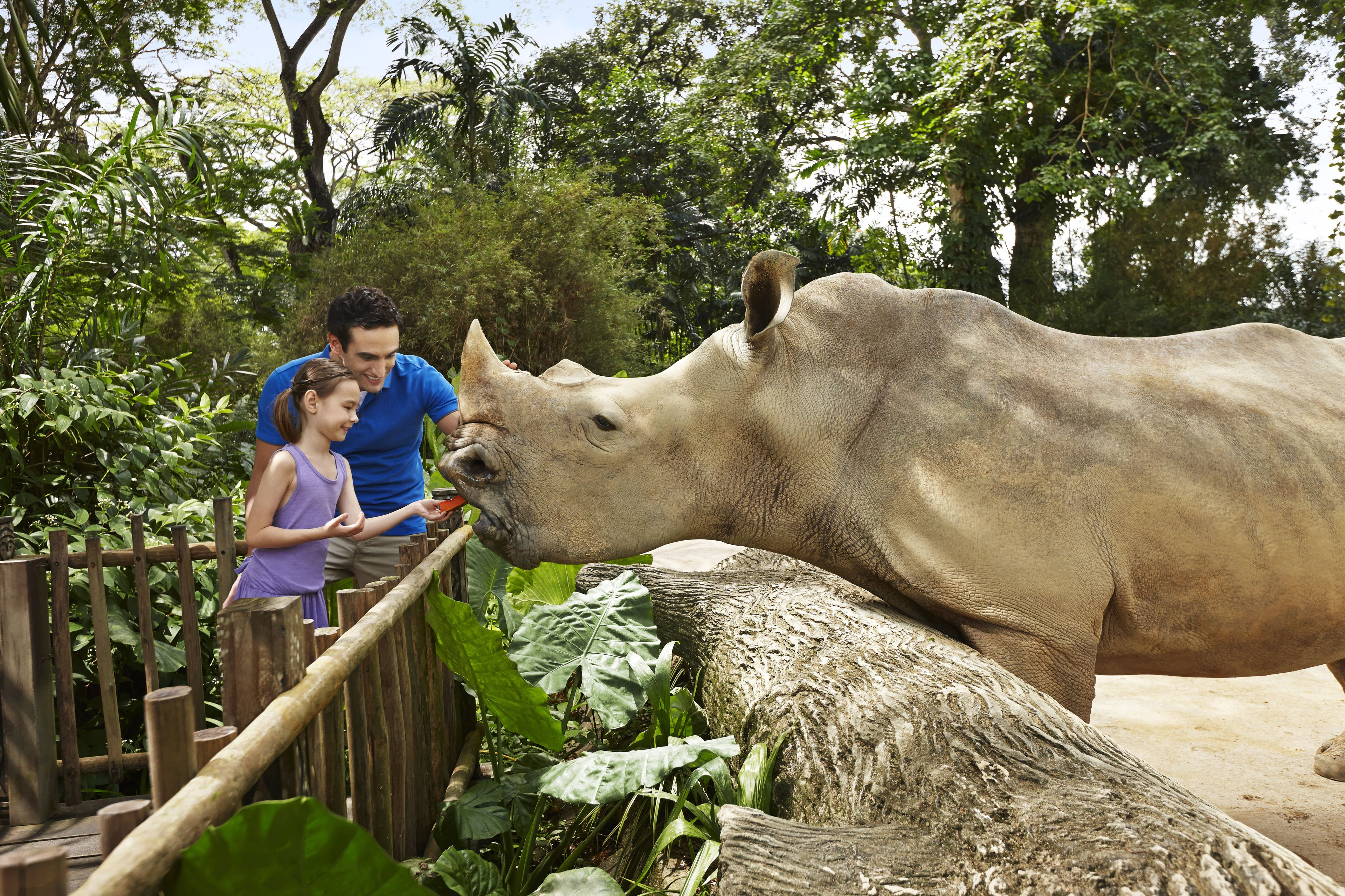 Zoo_RhinoFeeding_379_Main_04.jpg