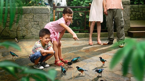 Young children looking at small colorful tropical birds at the Jurong bird park in Singapore