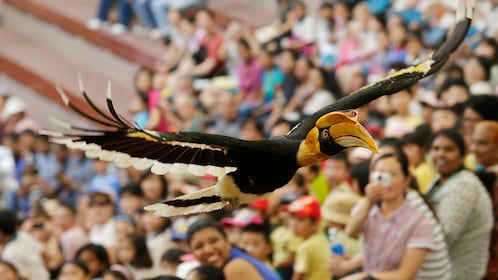 Large bird flies over crowd in Jurong Bird Park in Singapore